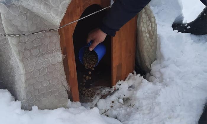 Susurluk'ta zorlu havalarda sokak hayvanları unutulmadı