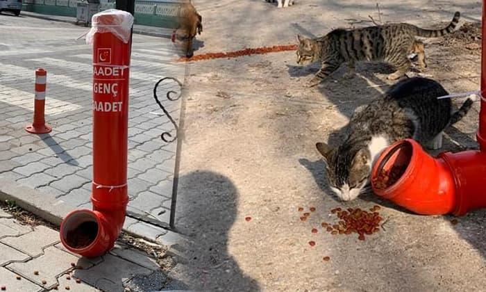 Susurluk sokaklarına kediler için mama kapları