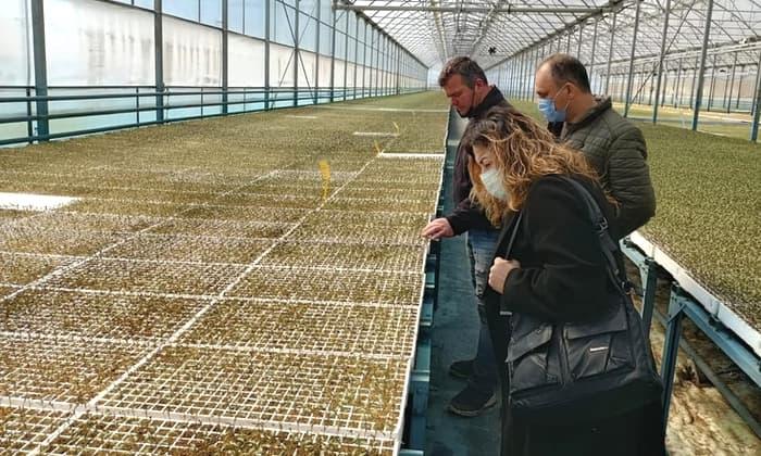 Beyköy fide üretim tesisi ziyaret edildi