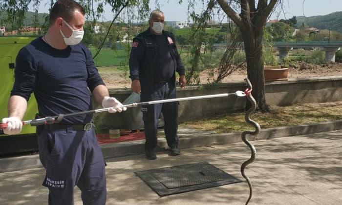 Susurluk'ta 1.5 metrelik yılan paniği