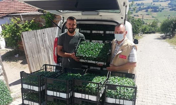 Susurluk'ta 20 bin adet jalopene biber fidesi dağıtıldı